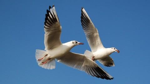 Para voar, além de asas, é preciso ter pés